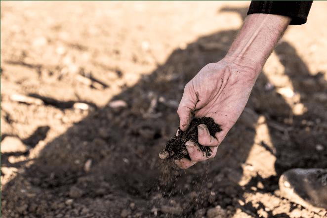tuin voorbereiden op droogte