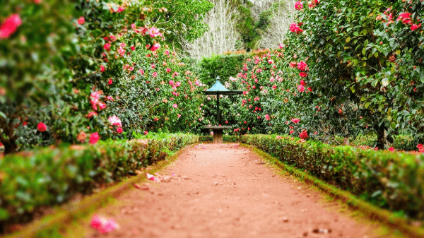 8 tips voor het vormgegeven van je tuin
