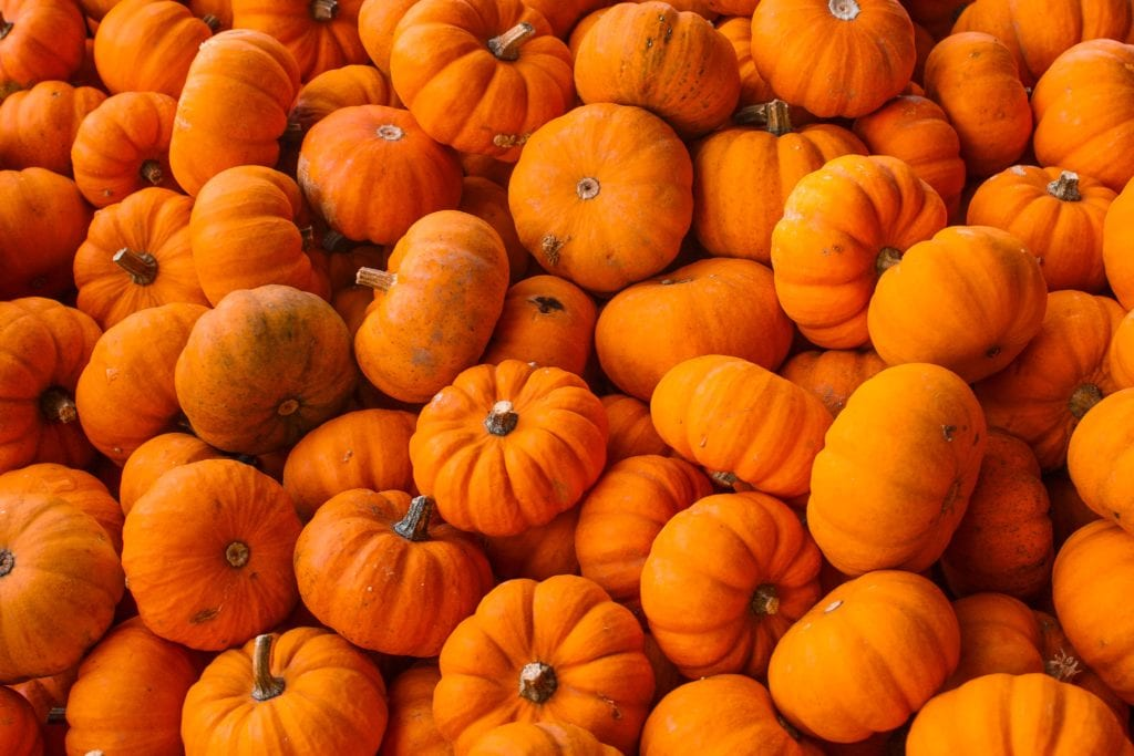 Meloenen - tuintips oktober